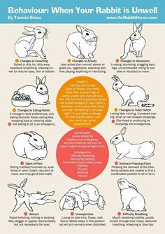 Bunnies/Rabbits can get sick very easily, so make sure your rabbit is healthy and please give your rabbit attention.