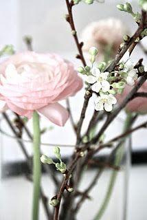 Ranunkel, blomstrende kvist