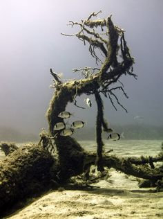 underwater tree. /national geographic