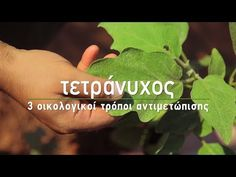 Ποια συμπτώματα εμφανίζουν τα φυτά που έχουν προσβληθεί από τετράνυχο, πώς μπορούμε να τον καταπολεμήσουμε και να προστατεύσουμε τον κήπο μας. Garden Works, Green, Tips, Nature, Flowers, Plants, Youtube, Naturaleza, Advice