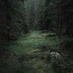 haunting and stunningly beautiful landscapes by coyhand. (be sure to check out the rest of his photostream. it's a feast for the eyes. Dark Green Aesthetic, Nature Aesthetic, Deep Forest, Forest Fairy, Magical Forest, Twilight, Different Aesthetics, Slytherin Aesthetic, Enchanted