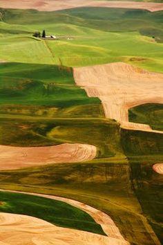 agriculture fields, eastern Washington (yup)