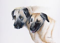 Kangal dog , dog art, pet portrait,. Reproduction of my original Kangal goat dog watercolor painting. Great for your cow collectibles and makes a great gift to any dog lover. Would look really cute anywhere in your home, makes wonderful kitchen art, farmhouse decor or gallery wall. Original may be available. ***** Great gift idea!.**** Easily pop your standard size giclee art print into a frame to display on a shelf or hang on a wall - or - order a canvas wrap which needs no mat or frame....