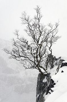 A Rowan tree in winter in the Dinorwic Slate Quarry 02