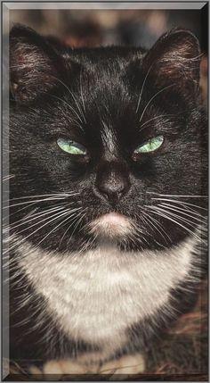 cute beautiful  STRAY CAT  #by Gabrielius Khiterer