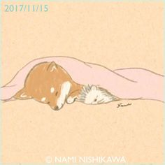 1333 お布団大好き柴犬 Shiba Inu likes fluffy quilts.