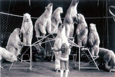 Ursula Böttcher and her ten polar bears at Ringling Bros. and Barnum & Bailey Circus (c.1980