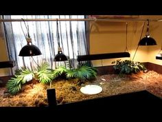 Are you thinking of buying a tortoise to keep? Tortoise pet care takes some planning if you want to be. Tortoise As Pets, Red Footed Tortoise, Tortoise House, Tortoise Habitat, Tortoise Table, Baby Tortoise, Sulcata Tortoise, Turtle Habitat, Tortoise Enclosure