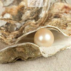 +++ Krisen als Chancen: die Muschel macht es uns vor +++  Ein störendes Sandkorn in eine Perle zu verwandeln: eine reife Leistung einer Muschel und ein kleines Naturwunder. Schicht für Schicht bildet die Muschel glänzendes Perlmutt um den Fremdkörper, um sich so vor Verletzungen zu schützen – mit der Zeit reift eine Perle heran. Bei uns verhält es sich wie mit der Muschel: Wir müssen uns öffnen, auch auf die Gefahr hin, verletzt zu werden. Herausfordernde Situationen, Lebenskrisen und…