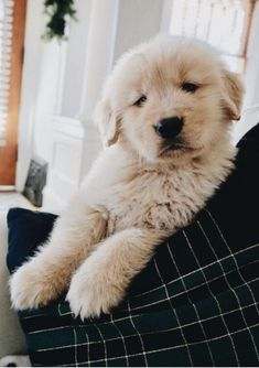 33 Ideas Dogs And Puppies Breeds Kids Best Big Dog Breeds, Loyal Dog Breeds, Dog Breeds That Dont Shed, Cute Puppy Breeds, Loyal Dogs, Cute Puppies, Best Dogs For Kids, Best Dogs For Families, Family Dogs