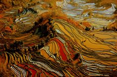 The glassy pools stretch as far as the eye can see in the mountainous Yuanyang county, one of the world's largest rice-producing areas, in China's Yunnan Province. Van Gogh Pinturas, Chinese Mountains, Rice Terraces, Van Gogh Paintings, Reportage Photo, Landscape Photos, Aerial View, Belle Photo, Beautiful Images