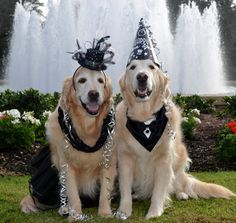 Happy New Year from Brie and Bentley