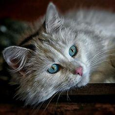 #cat #cats #pets #gatos #lovecats