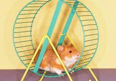 Resultado de imagen para ruedas para hamster ruso