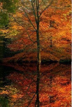 ✯ Autumn Reflection