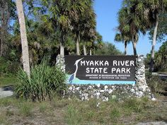 We spent a day at Myakka observing the trees from the canopy boardwalk. Myakka River State Park, Florida Vacation, Sunshine State, Us Travel, State Parks, Canopy, Places Ive Been, Childhood, Trees