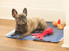 Different Types of Dog Cooling Products: Mats, Beds, Vests, Bandanas, Collars Pancreatitis In Dogs, Meds For Dogs, Psychiatric Service Dog, Havanese Dogs, Chihuahuas, Best Dog Food Brands, Dog Anxiety, Dry Dog Food, Dogs