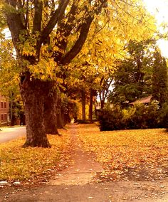 WSU maple st.    Beautiful in the Fall!  I walked down this street every day my senior year!