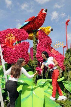 Madeira Flower Festival/float Flowers