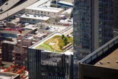 Seattle Art Museum- green roof