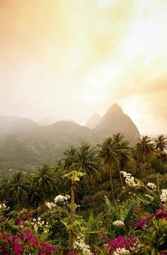The Caribbean island of St Lucia- my hubby & I climbed to the top of this, one of the hardest things I've ever done!