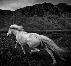 Horse running away.