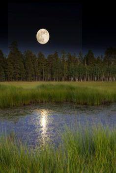 Moon Light On The Pond
