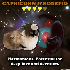 & in We have much more info if you register here: Scorpio And Capricorn, Scorpio Girl, Capricorn Compatibility, Numerology, Zodiac Signs, Astrology, Dating, Cats, Horoscopes
