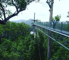 Walk above the treetops. | 27 Things You Didn't Know You Could Do In Tasmania