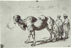 Page of A two-humped camel by REMBRANDT Harmenszoon van Rijn in the Web Gallery of Art, a searchable image collection and database of European painting, sculpture and architecture Rembrandt Drawings, Web Gallery Of Art, Dutch Golden Age, Dutch Painters, European Paintings, Old Master, Historian, Art Google, Art Sketches