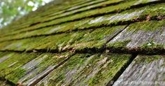 #alabama #alabamaparks #alabamafindings #green #beautiful #beauty #professional #professionalpictures #pictures #photo #nature #photography #moss #roof #oldroof #hannahhansenphotography #love #leaves #nature #naturephotography #fall