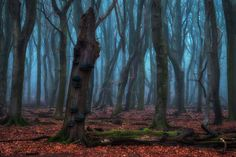 The Blue Forest, Veluwe, the Netherlands