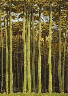 """Beech Trees, Hackfall"" by Simon Palmer (watercolour, ink and gouache) plus more Simon Palmer pictures. Contemporary Landscape, Landscape Art, Landscape Paintings, Beech Tree, Modern Landscaping, Art Graphique, Tree Art, Natural World, Painting & Drawing"