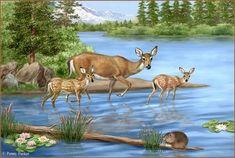 Deer Deer Me - always reminding me of God's LOVE Thomas Kinkade, Penny Parker, Animals And Pets, Cute Animals, Claude Monet, Vladimir Kush, Deer Art, Animal Books, Baby Deer