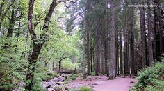 peaceful wooded trails #queenelizabethforestpark