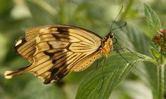 Butterflies of Agua Caliente Park Tucson, Arizona  #Kids #Events