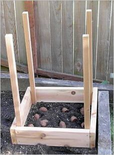 Grow 100 lbs. Of Potatoes In 4 Square Feet: {How To} : TipNut.com  Quite the clever gardening tip here folks! Today's feature includes tips from three different sources for growing potatoes vertically (in layers) instead of spread out in rows across your garden. If you have limited garden space or want to try some nifty gardening magic, this could be a great option for you.