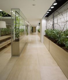 Farm-to-Desk: Vertical Urban Farm Shares Tokyo Office Space... urban farming walls. While the remodeled mixed-use Pasona facility is not exactly a secret, the building's living green facade only indirectly hints at the vast food production going on inside of this combined commercial and agricultural space.