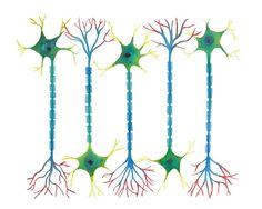 Neuron 5, neurons, science art, science print, watercolor art, watercolor print…