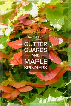 Do maple spinner affect gutter guard performance? Find out now! | LeafFilter North, LLC