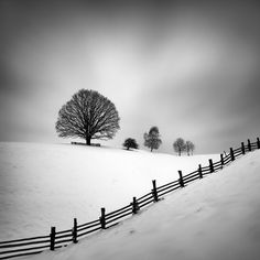Tree's  Picture Black and white  By Martin Rak