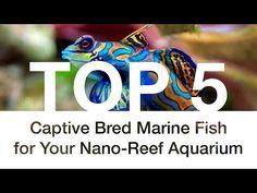 YouTube Saltwater Aquarium Fish, Nano Aquarium, Reef Aquarium, Marine Fish, Cata, Get Excited, Animal, Youtube, Top