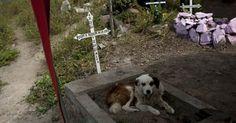 Câmara de Blumenau aprova projeto para sepultar animais com donos