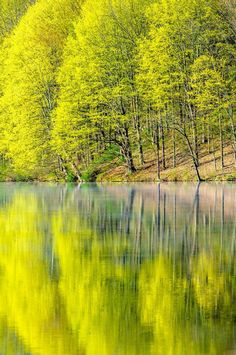 trees.quenalbertini: Tree reflection | The Voice of My Soul