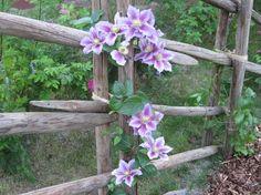 Country Fences, Side Garden, Garden Structures, Garden Inspiration, Wood Crafts, Outdoor Living, Garden Design, Planters, Green