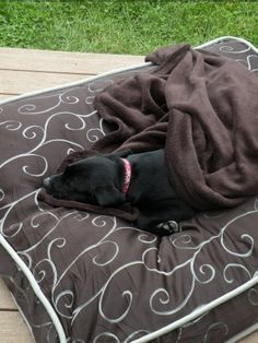 The princess napping outside on her thrown.