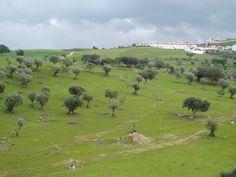 Alandroal-surrounded by cork oaks