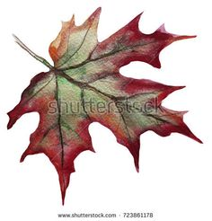 Maple leaf isolated. maple autumn leaf hand-painted watercolor isolated on white background