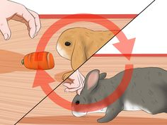A house rabbit can be a fun addition to the family. However, these animals will need to have as much care as a dog or a cat. Rabbits typically live eight to 12 years, so they require a long-term commitment from their owners.http://www.me...