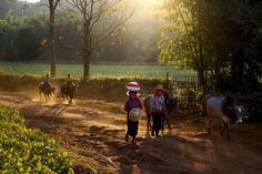 Morning in the Burmese mountains Photo by Alexandros Tsoutis -- National Geographic Your Shot